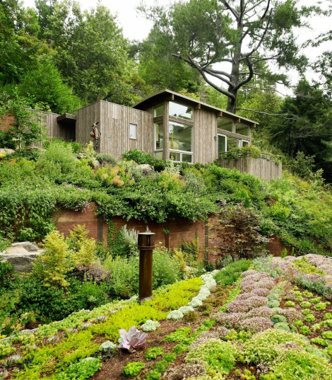 forest house with outdoor garden